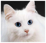 Feline Leukemia Treatment